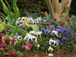 Spring flowers by Ananda Leeke